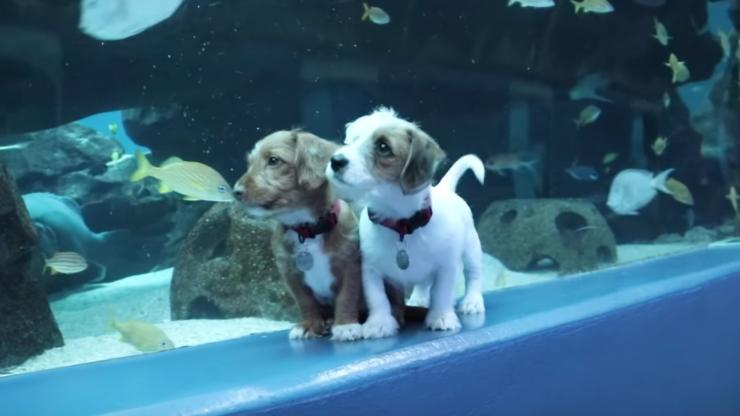 puppies in aquarium